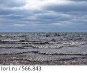 Финский залив зимой. Стоковое фото, фотограф Алла Виноградова / Фотобанк Лори