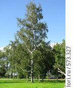 Купить «Дерево», фото № 573327, снято 27 июля 2008 г. (c) Алексей Алексеев / Фотобанк Лори