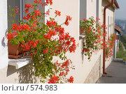 Пражские домашние цветы. Стоковое фото, фотограф Андрей Солодовников / Фотобанк Лори