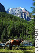 Купить «Лошади на Алтае», фото № 574995, снято 27 марта 2007 г. (c) Игорь Потапов / Фотобанк Лори