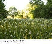 Купить «Поляна одуванчиков», фото № 575271, снято 26 мая 2007 г. (c) Туркин Вадим / Фотобанк Лори