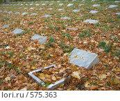 Купить «Солдатские могилы, засыпанные желтой листвой, на Митрофановском кладбище города Пензы», фото № 575363, снято 25 марта 2019 г. (c) Дмитрий Савостин / Фотобанк Лори