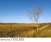 Купить «Одинокое дерево в осенних лугах», фото № 575583, снято 9 ноября 2008 г. (c) Олег Рубик / Фотобанк Лори