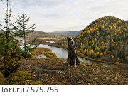 Купить «Осенний таежный пейзаж с собакой. Горы Южной Сибири.Река Мана.», фото № 575755, снято 3 октября 2008 г. (c) Татьяна Белова / Фотобанк Лори