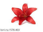 Купить «Красная лилия на белом фоне», фото № 578403, снято 19 июля 2008 г. (c) Cветлана Гладкова / Фотобанк Лори