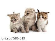 Котята. Стоковое фото, фотограф Cветлана Гладкова / Фотобанк Лори