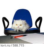 Купить «Белый пушистый кот на офисном стуле», фото № 588715, снято 19 октября 2008 г. (c) Георгий Shpade / Фотобанк Лори