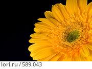 Купить «Желтая гербера на черном фоне», фото № 589043, снято 28 января 2006 г. (c) Юлия Сайганова / Фотобанк Лори