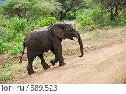 Купить «Слоненок вывалявшийся в грязи переходит дорогу», фото № 589523, снято 21 января 2008 г. (c) Знаменский Олег / Фотобанк Лори