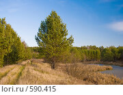 Купить «Осенний пейзаж», фото № 590415, снято 31 октября 2008 г. (c) Юрий Бельмесов / Фотобанк Лори