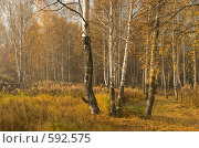 Купить «Осенний пейзаж», фото № 592575, снято 8 октября 2008 г. (c) Юрий Бельмесов / Фотобанк Лори
