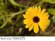 Купить «Цветок желтый», фото № 594075, снято 16 августа 2008 г. (c) Абрамов Антон / Фотобанк Лори