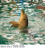 Дельфин. Стоковое фото, фотограф Алексей Хабазов / Фотобанк Лори