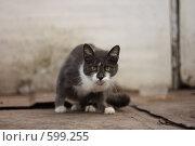 Купить «Серый кот с желтыми глазами и белыми лапками», фото № 599255, снято 16 октября 2008 г. (c) Яна Королёва / Фотобанк Лори