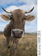 Купить «Корова крупным планом с искаженной перспективой», фото № 600351, снято 3 ноября 2008 г. (c) Владимир Воякин / Фотобанк Лори