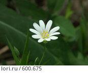 Купить «Белый цветок весной», фото № 600675, снято 19 мая 2005 г. (c) Сергей Бехтерев / Фотобанк Лори