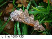 Капли утренней росы на листе. Стоковое фото, фотограф Володина Светлана / Фотобанк Лори