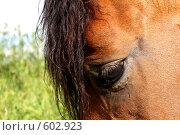 Купить «Лошадиная морда», эксклюзивное фото № 602923, снято 3 июля 2008 г. (c) Яна Королёва / Фотобанк Лори