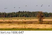 Осеннее настроение природы. Стоковое фото, фотограф Андрей Явнашан / Фотобанк Лори