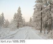 Купить «Зима. Лесная дорога.», фото № 606995, снято 3 февраля 2008 г. (c) Афанасьев Юрий / Фотобанк Лори