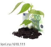 Купить «Молодой росток и евро», фото № 610111, снято 10 июля 2008 г. (c) Cветлана Гладкова / Фотобанк Лори