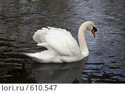 Купить «Белый лебедь и утка», фото № 610547, снято 15 марта 2008 г. (c) Lina Kurbanovsky / Фотобанк Лори