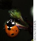 Купить «Макро: божья коровка семиточечная», фото № 613675, снято 16 сентября 2019 г. (c) Александр Савушкин / Фотобанк Лори