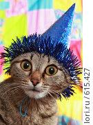 Купить «Ошалевшая кошка в праздничном колпаке», фото № 615427, снято 14 декабря 2008 г. (c) Круглов Олег / Фотобанк Лори