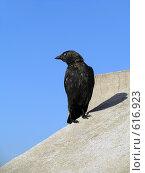 Ворон. Стоковое фото, фотограф Sandra-Lucia / Фотобанк Лори