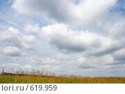 Купить «Небо в облаках», фото № 619959, снято 14 июня 2008 г. (c) Юрий Брыкайло / Фотобанк Лори