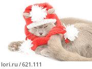 Купить «Кошка в вязаной шапке и шарфе», фото № 621111, снято 14 декабря 2008 г. (c) Ксения Крылова / Фотобанк Лори