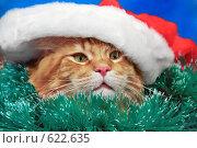 Купить «Новогодний рыжий котик в зеленой мишуре и дед-морозовской шапке», фото № 622635, снято 23 ноября 2008 г. (c) Fro / Фотобанк Лори