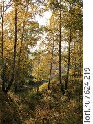Осенняя берёзовая лощина. Стоковое фото, фотограф Сергей Негробов / Фотобанк Лори