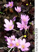 Купить «Цветки бессмертника», фото № 624939, снято 8 сентября 2007 г. (c) Хайрятдинов Ринат / Фотобанк Лори