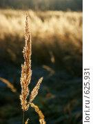 Купить «Осень. Трава в поле», фото № 625931, снято 8 ноября 2008 г. (c) Сергей Пестерев / Фотобанк Лори