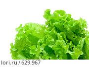 Купить «Листья салата», фото № 629967, снято 21 декабря 2008 г. (c) Бутенко Андрей / Фотобанк Лори