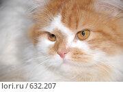 Купить «Кот», фото № 632207, снято 29 февраля 2008 г. (c) Алексей Семьёшкин / Фотобанк Лори