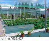 Купить «Оранжерея - магазин», эксклюзивное фото № 633427, снято 26 мая 2008 г. (c) lana1501 / Фотобанк Лори