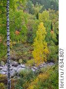 Отдельно стоящая береза у горной реки. Стоковое фото, фотограф Юрий Бульший / Фотобанк Лори