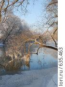 Купить «Коряга во льду», фото № 635463, снято 27 декабря 2008 г. (c) Петров Алексей / Фотобанк Лори