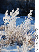 Купить «Замерзшие травинки», фото № 635475, снято 27 декабря 2008 г. (c) Петров Алексей / Фотобанк Лори