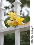 Осень. Стоковое фото, фотограф Лена Осадчая / Фотобанк Лори