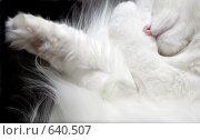Купить «Кошка спит свернувшись. Вид сверху. Фрагмент», фото № 640507, снято 4 июня 2020 г. (c) Юрий Шаньшин / Фотобанк Лори