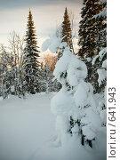 Купить «Зимний пейзаж», фото № 641943, снято 2 января 2009 г. (c) Андрей Доронченко / Фотобанк Лори