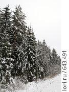 Купить «Заснеженный лес», фото № 643491, снято 2 января 2009 г. (c) Медведева Мила / Фотобанк Лори
