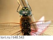 Стрекоза. Стоковое фото, фотограф Андрей Тыщук / Фотобанк Лори