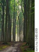 Купить «Дорога к свету», фото № 648699, снято 21 сентября 2005 г. (c) Михаил Лавренов / Фотобанк Лори