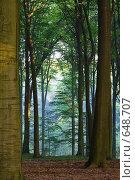 Купить «Туманное утро», фото № 648707, снято 21 сентября 2005 г. (c) Михаил Лавренов / Фотобанк Лори