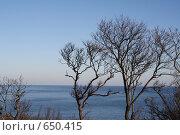 Купить «Деревья на фоне моря», фото № 650415, снято 4 января 2009 г. (c) Вальченко Любовь / Фотобанк Лори
