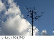 Купить «Сухое дерево на фоне неба», фото № 652943, снято 18 мая 2006 г. (c) Александр Ерёмин / Фотобанк Лори